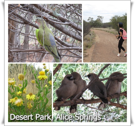 a story of a journey in the ayers rock near alice springs australia Alice springs has a lot of history and is well worth spending an extra where we stayed at the ayers rock campground near the motorhome conversion co.